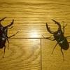 同僚と昆虫採集