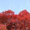 17-10  11月23日(祝)に思い出す: 大学入試と紅葉