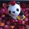 4-14   愛すべき花たち〜ヘリクリサムの花畑〜