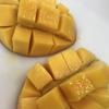 試食 木成り完熟マンゴー