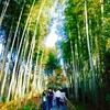 【国内旅行】静岡③伊豆の小京都と呼ばれる修善寺の温泉街を散策。