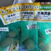 さあ、ジャガイモを植えましょう。