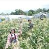 夏野菜収穫体験&畑ランチ2017
