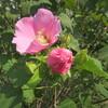 今咲く花に惑溺