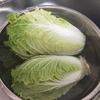 6月の収穫 第二弾 ダイソーの種60日白菜リベンジ成功!