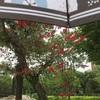 ディゴが咲く風景