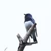 今日の探鳥