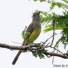 ベリーズ アルツンハの野鳥たち