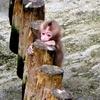 #小猿#上野動物園#ニホンザル