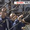 熊本で17日午後に桜の開花が発表!満開は25日頃の予想なので、週末はお花見にGO!!