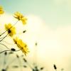 花粉の季節に選ぶアロマって?