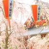 上野・秋色桜