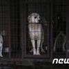 韓国「台湾、アジア初の犬・猫食用禁止」