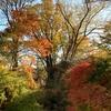 紅葉の懐古園