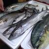 今朝伊根の漁港で直接買い付けた魚たち