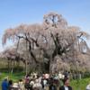 東北のお花見は最高です!ゴールデンウィークは東北の桜の名所に行こう!