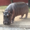 爆走したインドの動物園(Nehru Zoological Park)とスリルの全くないサファリパーク