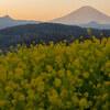 春待ち時 〜2021年、神奈川県吾妻山にて〜