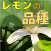 【レモン栽培】レモンの品種と苗木の選び方【柑橘類の育て方】