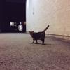 モントリオールの猫2