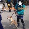 柴犬チャー、熱海へ行く!!