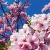 海と桜のコラボ  〜尾道