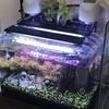 アクアリウム:水草を追加導入&水槽を導入し、アクアポニックスを拡大!!