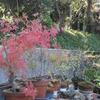 秋の実、しろたぶ、さねかずら、のいばらなど