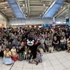 くまモン 品川駅と東京駅に出没