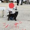 甲斐犬サン、ドッグショーを見学するの巻〜大阪西ワンズドッグクラブ展*・゜゚・*:.。..。.:*・'(*゚▽゚*)'・*:.。. .。.:*・゜゚・*パァァァァァァァ❤︎