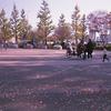 Photo No.250