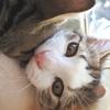 何度目だ💦保護猫カフェBoni's Houseさんへ💛
