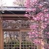 【梅の名所】その⑤ 香梅園(小村井香取神社)