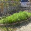 花壇にもそろそろ春の気配が・・・