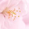 桜咲く中、本日入学を迎えられた学生、父兄の皆さま、おめでとう!!!!