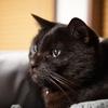 寒い夜と湯たんぽ代わりにならない猫
