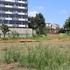 中野区の本二東郷やすらぎ公園の芝そり斜面はいつまで養生中ですか