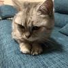 【犬猫用腎臓ケアサプリ】カリナールコンボと好相性のウェットフード発見