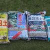 【エケベリア】実験! 単用土と園芸培養土と多肉専用土でエケベリアを育ててみる