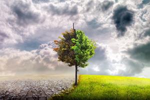 【湿れる木より火を出だし、乾ける土より水を儲けんが如く強盛に申すなり】生命が変わり、環境が変わり、生活が変わる