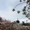 桜番外編~遅咲きの桜・仁和寺~