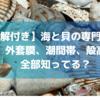【図解付き】知らなきゃ損!海と貝の専門用語集! 外套膜、潮間帯、殻高等