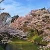 振り返りの桜、花見散歩 あちこち歩いて写したまとめ