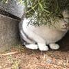 【地域猫】vol.17 雪の世界から戻ったら雪・・・寒いっ!