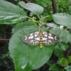 庭の害虫 ウメエダシャク カメムシ カブラハバチ