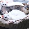 猫3匹で眠れる大きめベッドを買いました