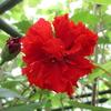 夏の花(3)
