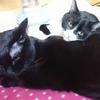 今日の黒猫モモ&白黒猫ナナの動画ー936