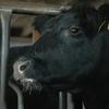 輸入牛肉(オーストラリア・アメリカ・ニュージーランド産など)の魅力について
