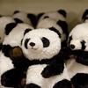 【パンダに会いたい】JAL特典航空券で行く南紀白浜アドベンチャーワールド~予約編